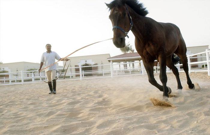 Người huấn luyện động vật
