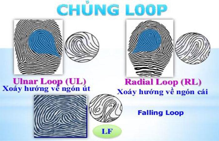 Chủng Loop